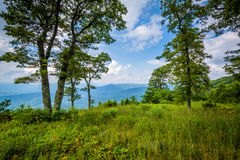 Trees at Jewell Hollow Overlook, on Skyline Drive in Shenandoah Stock Image