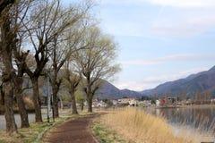 Trees in kawaguchiko lakeside. Stock Image