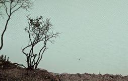 Trees at Kawah Putih, Bandung Royalty Free Stock Photography