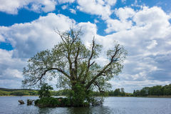 Trees in Koelpinsee on the island Usedom Royalty Free Stock Image