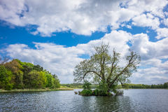 Trees in Koelpinsee on the island Usedom Royalty Free Stock Images