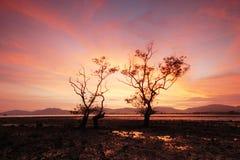 trees kopplar samman Royaltyfri Foto