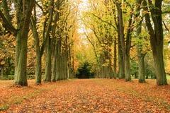 trees långt Fotografering för Bildbyråer