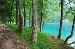 Trees by Lago di Fusine Superiore Royalty Free Stock Photo