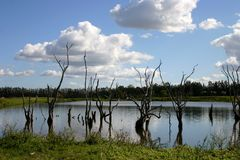 Trees in Lake. Tree stumps in lake Royalty Free Stock Image