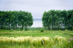 Trees and lake Royalty Free Stock Image