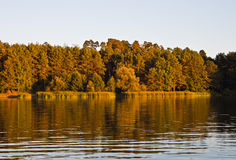 Trees and Lake. Blue sky and green trees in nature over lake with reflections Royalty Free Stock Photography