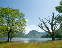 Trees and lake Royalty Free Stock Photography