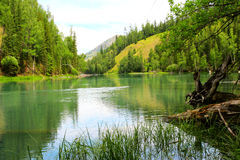 Trees and lake. The lake with trees .looks beautiful Royalty Free Stock Photo
