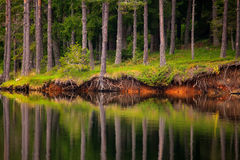 Trees in lake Stock Photography
