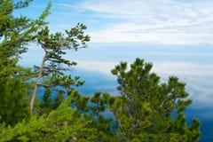 Trees on Lake Baikal Stock Image