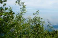 Trees on Lake Baikal Royalty Free Stock Photography
