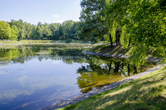 Trees at the lake. The trees bent to the water Royalty Free Stock Photo