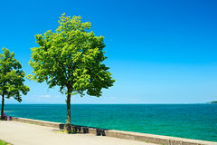 Trees by Lake Constance at Germany Royalty Free Stock Photo