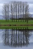 Trees by a lake in Cumbria, England royalty free stock photos