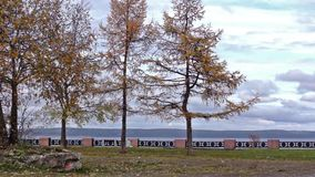Trees on lake embankment in autumn. Season stock footage
