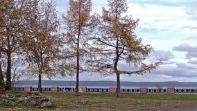 Trees on lake embankment in autumn stock footage