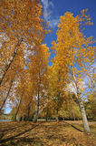 Trees by a lake with fall colors Royalty Free Stock Photos