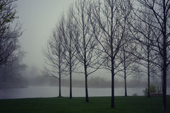 Trees Lake Fog Royalty Free Stock Photography