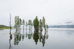 Trees in lake Royalty Free Stock Photography