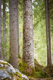Trees at Lake Hintersee, Berchtesgaden, Germany Stock Photography