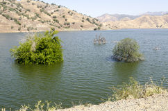 Trees in Lake Kaweah Royalty Free Stock Photos