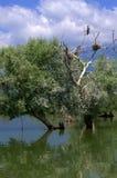 Trees in lake,Kerkini,Greece Stock Images