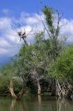 Trees in lake,Kerkini,Greece Stock Photo