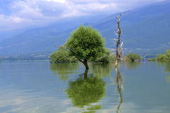 Trees in lake,Kerkini,Greece Royalty Free Stock Images