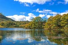 Trees,Lake and Mountain Stock Photos