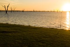 Trees in Lake Mulwala Australia stock image