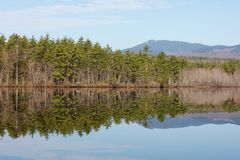 Trees Lake Reflection Water Stock Photography