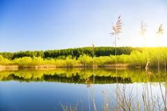 Trees on the lake shore Stock Photography