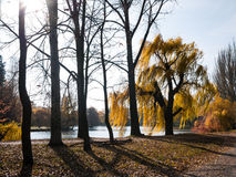 Trees on the lake shore Stock Image