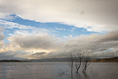 Trees on lake Stock Photography
