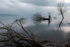 Trees on lake Stock Photos