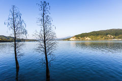Trees in a lake in winter Royalty Free Stock Images