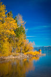 Trees at the lakeside Stock Photography