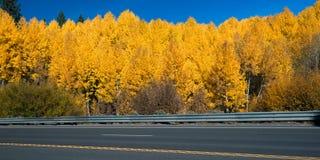 Trees at the lakeside, South Lake Tahoe, Lake Tahoe, California, Stock Photos