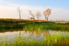 Trees lakeside sunrise Stock Images