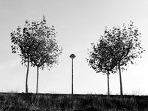 Trees and a lamppost in la Galea Stock Photography