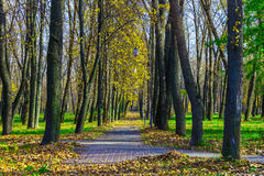 Trees and Lamps Along Park Alley in Autumn. Trees and Lamps Along Park Alley and Fallen Dry Leaves at Sunny Day in Autumn Stock Photography