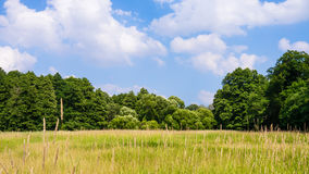 Trees in landscape Royalty Free Stock Images
