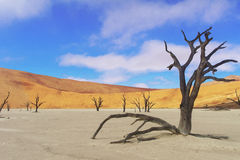 Trees and landscape of Dead Vlei desert, Namibia Stock Images