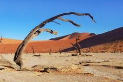 Trees and landscape of Dead Vlei desert, Namibia Stock Image