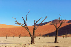 Trees and landscape of Dead Vlei desert, Namibia Stock Photography