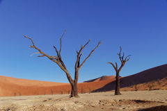 Trees and landscape of Dead Vlei desert, Namibia Royalty Free Stock Photo