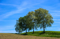 TREES AND LANDSCAPE Royalty Free Stock Image