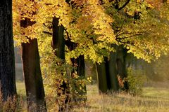 Trees landscape at sunrise. Autumn trees next to forest at sunrise Stock Photo
