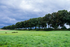 Trees in landscape Royalty Free Stock Image